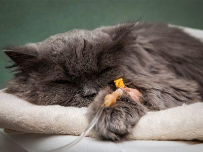 dog_cat_kidney_disease_kennesaw_marietta