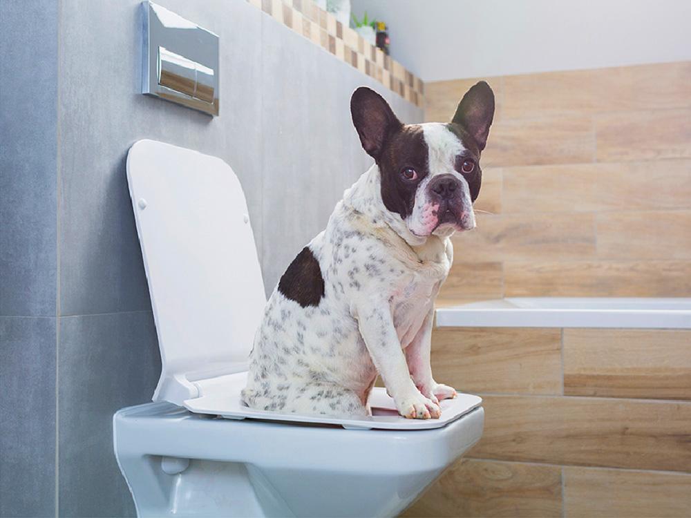 dog_diarrhea_kennesaw_marietta