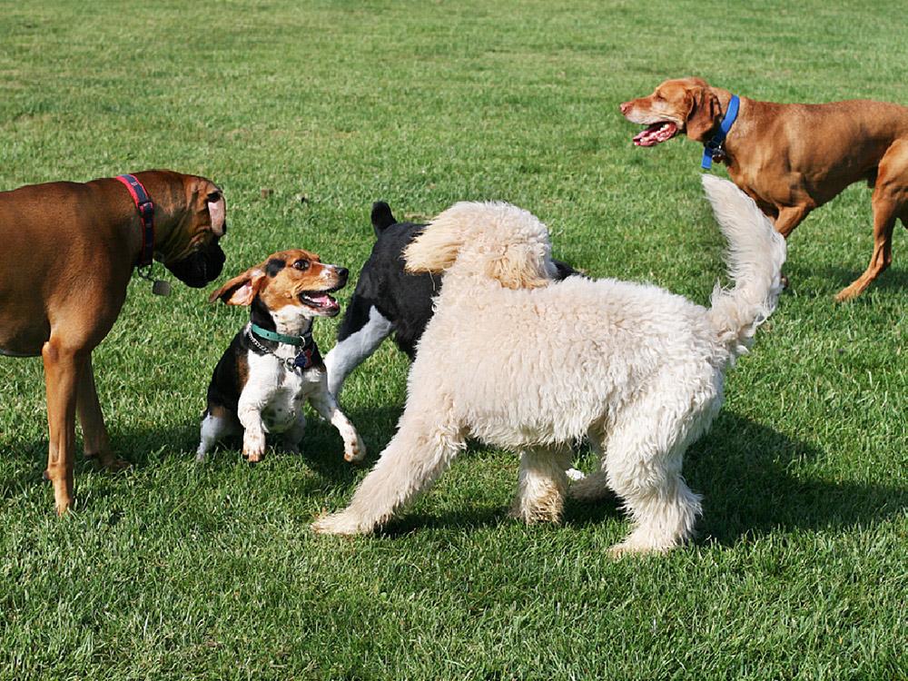 dog park day play Kennesaw marietta