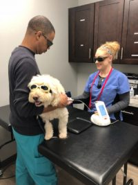 veterinarian_pet_vaccines_laser-treatment_cancer_care_pain_management_kennesaw_marietta_georgia