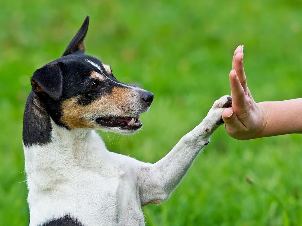 dog_training_kennesaw_marietta
